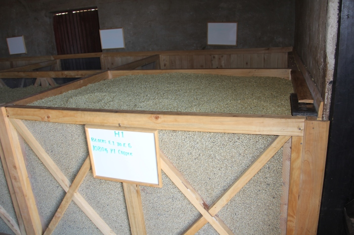 Conditioning Coffee in Bins after Drying